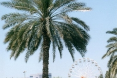 LQ Dubai 2000 (63)